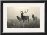 American Elk Prints by R. Hinshelwood