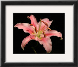 Dream Lilies I Prints by Renee Stramel