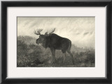 American Moose Prints by R. Hinshelwood