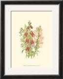 Summer Garden VIII Poster by Anne Pratt