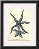 Indigo Starfish I Prints by Denis Diderot