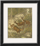 Small Roe Deer Prints by Friedrich Specht