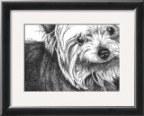 Bella the Yorkie Posters by Beth Thomas