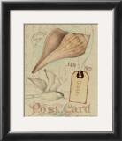 Postcard Shells IV Poster by Nancy Shumaker Pallan