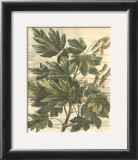 Weathered Maple Leaves I Poster by Gerard Paul Deshayes