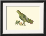 Purple-Tailed Parakeet Print by George Shaw