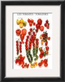 Tomatoes Prints