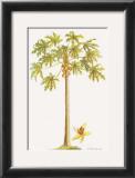 Papaya Tree Prints by Georg Dionysius Ehret