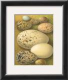 Bird Egg Collection I Art