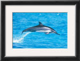 Spinner Dolphins Prints by Michael S. Nolan