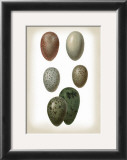 Bird Egg Study VI Art