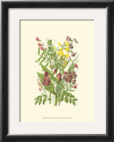 Summer Garden IX Prints by Anne Pratt