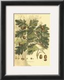 Antique Oak Tree Posters by  John Miller (Johann Sebastien Mueller)
