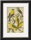 Petite Songbirds III Print by  Cassel