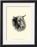 Antique Cattle II Posters by F. Lehnert