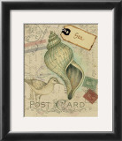 Postcard Shells II Prints by Nancy Shumaker Pallan