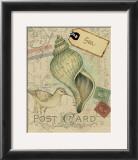 Postcard Shells II Prints by Nancy Shumaker Pallan