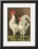 Roosters VI Print by  Cassell
