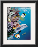 Dolphin's Reef Posters by Mark Mackay