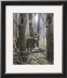 Woodland Sentry Prints by Kevin Daniel