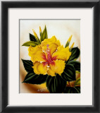 Yellow Hibiscus Prints by Ted Mundorff