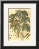 Antique Sycamore Tree Art by  John Miller (Johann Sebastien Mueller)