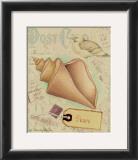 Postcard Shells III Prints by Nancy Shumaker Pallan