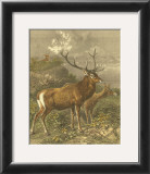 Small Red Deer Posters by Friedrich Specht