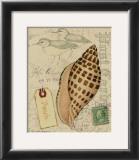 Postcard Shells I Posters by Nancy Shumaker Pallan