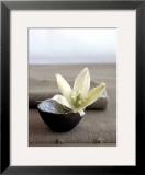 Yucca Flower Prints by Amelie Vuillon