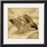 Conch Print by John Seba