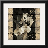 Orchids in Bloom II Print by John Seba