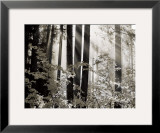 Misty Forest Print by Dennis Frates