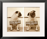 Pugsy Malone Print by Jim Dratfield