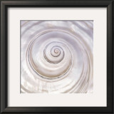 Pearly Shell Prints by Mark Goodall