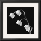 Spring Bells I Prints by Michael Faragher