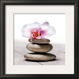 Orchidee aux Galets Prints by Stephane De Bourgies