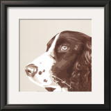 Springer Spaniel Art by Emily Burrowes