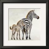 Zebre et Son Petit de Ndutu Posters by Danielle Beck