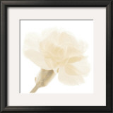 Carnation II Print by George Fossey