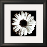 Gerbera Print by Bill Philip