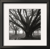Oak Grove, Winter Prints by William Guion