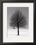 Winter Tree Poster by Ilona Wellman