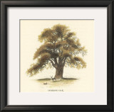 Common Oak Prints by Samuel Williams