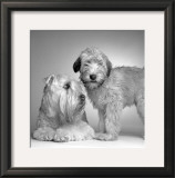 Ruff and Daisy Prints by Amanda Jones