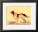 Hunting Dogs, Spaniel Prints by Andres Collot
