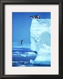 Penguins Diving Off an Iceberg Art by Steve Bloom