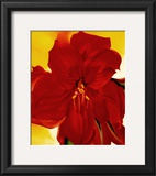 Red Amaryllis, 1937 Posters by Georgia O'Keeffe