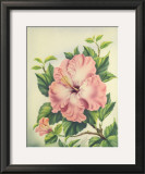 Pink Hibiscus Posters by Ted Mundorff