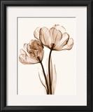 Parrot Tulips II Prints by Steven N. Meyers